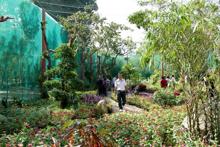 Vườn bướm hoa lan