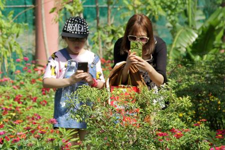 Du khách thích thú tham quan, chụp hình các loài bướm.
