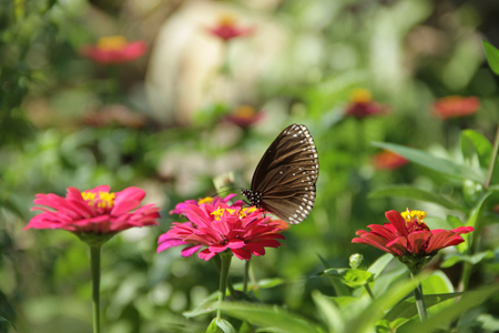 Nơi đây có hơn 100 loài bướm khác nhau
